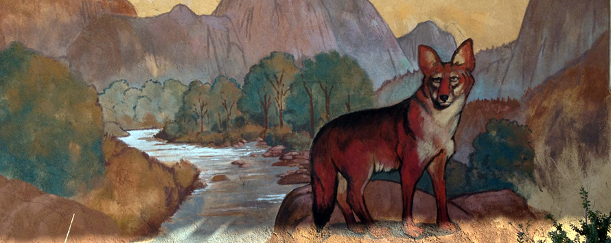Red Coyote Mural 890x354